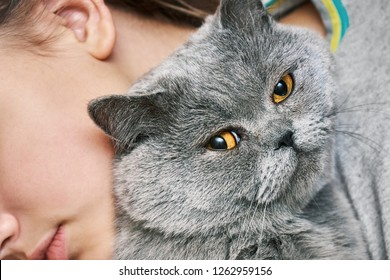 British shorthair tomcat lying with a sleeping teenager girl