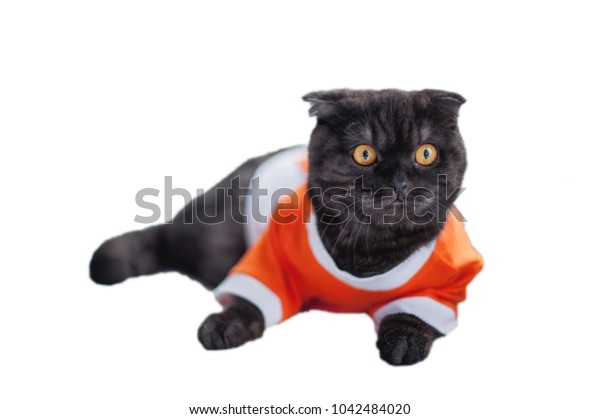 British short-haired black cat in a sports T-shirt. Cat - football player or sportsman isolated on white background.
