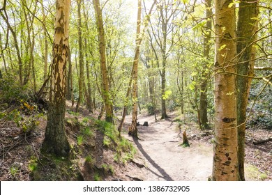A british woodland heath in spring time with sunlight through the trees illuminating the new green leaves and a path weaving through. Mousehold Heath, Norwich, UK.