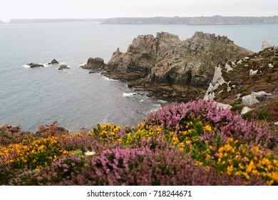 The Brittany coast with floral field in typical cloudy weather