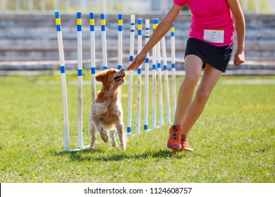 Brittany dog with handler girl at the weave poles in agility competition.