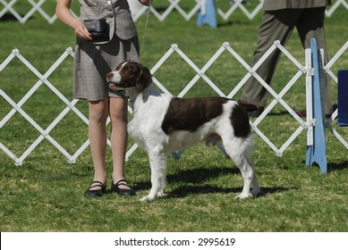 Brittany dog with her handler