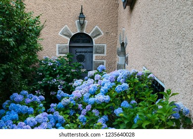 Brittany region in France house façade with blue hydrangea flowers.
