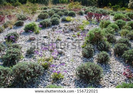 2ddba94224d4c0 Britzer Garten Berlin Dry Garden Stock Photo (Edit Now) 156722021 ...