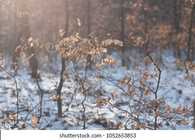 broadleaf forest in winter morning with frosty branches and tree