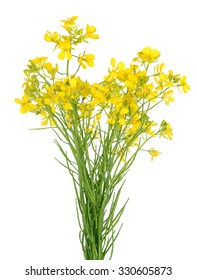 Broccoli Flower bunch isolated on white background