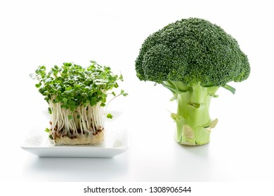 Broccoli and Broccoli Sprout on white background.