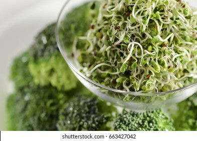 Broccoli sprouts in a glass dish with broccoli pieces on a white plate.