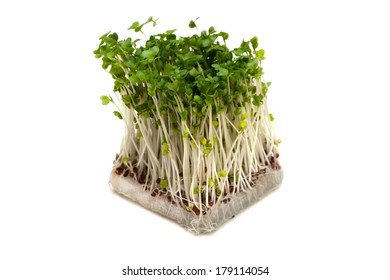 Broccoli Sprouts-Brassica oleracea, This image is available for clipping work.