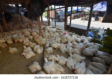 Broiler chicken traders increase supply to meet the needs of Eid in the Semarang Kaligawe Kubro Market. (05/29/2015) during Ramadhan the demand for chicken meat increased and chicken prices rise.