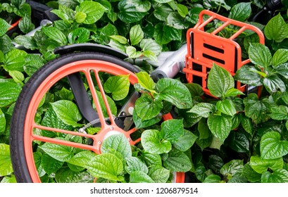 a broken bicycle lie down on the bushes of green plant