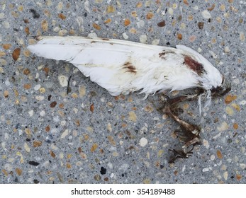 A broken, bird wing with bloody bare bone attached lies discarded