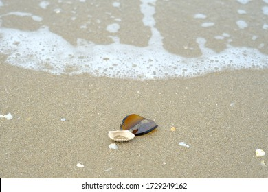 Broken brown glass and seashells washed up on the beach on foamy wave background. Garbage on the beach.