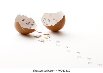A broken egg and the chick footprints walking away