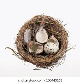broken egg shells in nest  on white background
