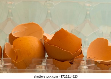 Broken eggs inside the container
