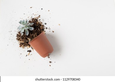 Broken falling plant pot of cactus in top view isolated on white background.