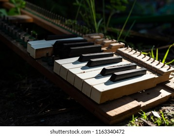 Broken piano with missing keyes scattered on the ground among plants and stones.