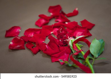 A broken rose with bruised petal.