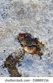 Broken shell in snow