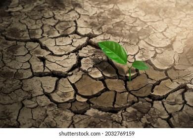 Broken soil in arid areas, with trees growing in arid areas, global warming.