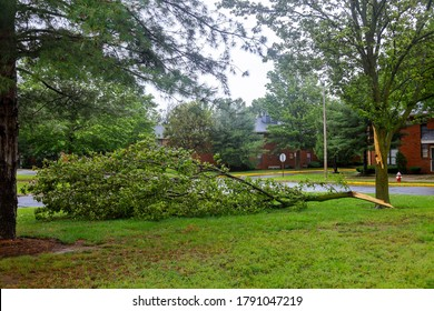 Broken tree fall down block the damages after of night hurricane great storm
