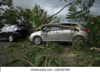 Broken tree fallen on top of parking car,damaged car after super typhoon Mangkhut in China on16 Sep 2018