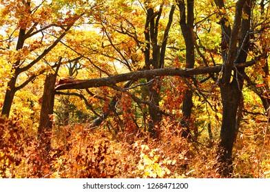 Broken tree in the forest in autumn season