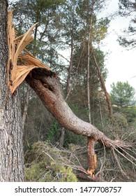Broken tree in a forest in Catalonia Spain