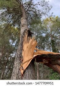 Broken tree in a forest in Spain