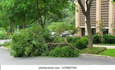 a broken tree limb blocking part of a street