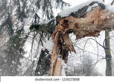 broken tree trunk macro snow