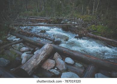 Broken trees in water