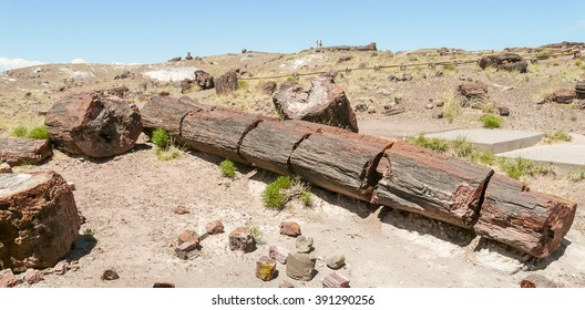 Broken trunk of petrified tree in Petrified Forest National Park