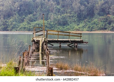 Broken wooden jetty with kingfisher on top of post in Cutipay River, Valdivia, Chile