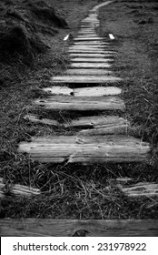 Broken wooden pathway to a remote Scottish beach, surrounded by rough grasses and heather.
