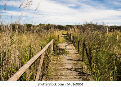 Broken wooden platform in wetlands area Sotogrande, Andalusia, Spain. Grass growing through the holes in the bridge. Missing planks. Broken boards. Dangerous to go through. Needs fixing. Closed path.