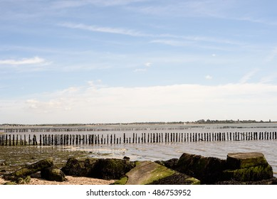 Broken and worn sea posts act as a barrier to the oncoming sea waves at Cudmore Grove on Mersea Island in Essex England