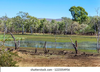 Brolgas in the wetlands of the Kimberley region of outback Western Australia.