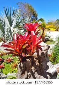 Bromeliad in natural park
