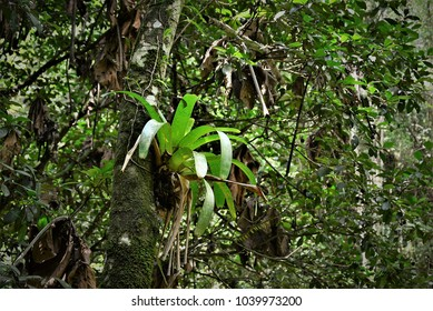 A bromeliad on the tree trunk