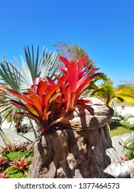 Bromeliad with palms