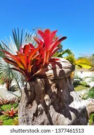 Bromeliad in a tropical garden