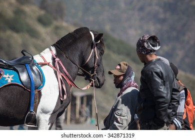 BROMO JAVA,INDONESIA - OCT 13,2015 : Horse riding service around Bromo Tengger Semeru National Park, East Java, Indonesia.