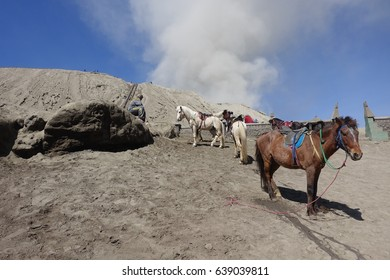 Bromo volcano,Java island,Indonesia.Horses in a volcanic desert,