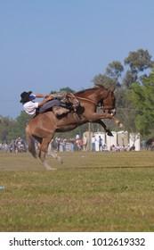 Broncos Horses Gauchos Argentina wild
