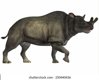 Brontotherium on White - Brontotherium is an extinct rhinoceros-like herbivore that is related to horses. Fossils have been found in North America from the Early Oligocene of the Cenozoic Period.