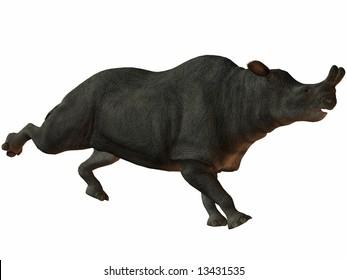 Brontotherium-3D Dinosaur