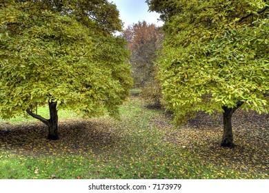 Bronx Botanical Garden , New York city
