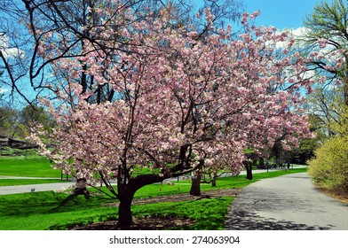 New York Botanical Images Stock Photos Vectors Shutterstock